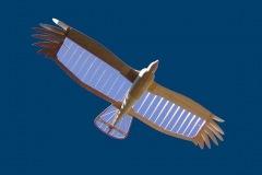 turkey-vulture-glider-radio-control-soaring-bird-plane-rc